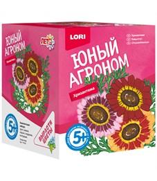 """Набор для выращивания растений Lori """"Юный агроном. Хризантема"""", от 5-ти лет"""