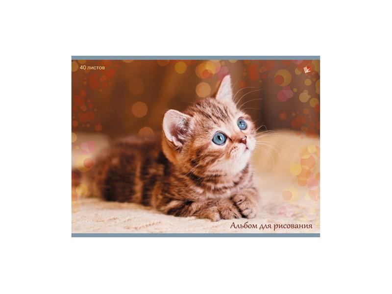 Альбом Unnika Полосатый котенок 40 л. А4 склейка